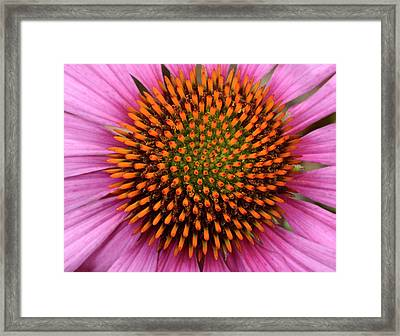 Coneflower Centre Abstract Framed Print by Nigel Downer