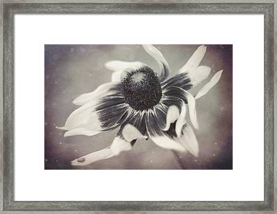 Coneflower In Monochrome Framed Print