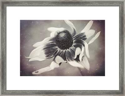 Coneflower In Monochrome Framed Print by Beverly Stapleton