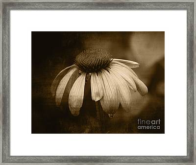 Framed Print featuring the photograph Coneflower In Sepia by Marjorie Imbeau