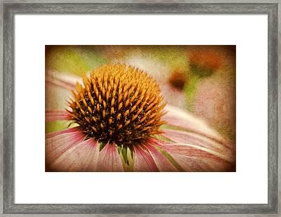 Coneflower Framed Print by Kelly Nowak