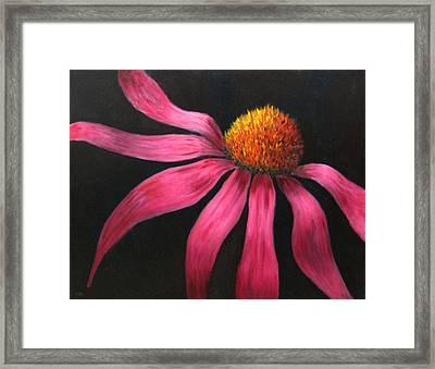 Coneflower Framed Print by Marie-louise McHugh