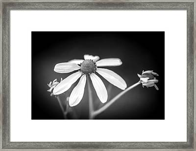 Coneflowers Echinacea Yellow Painted Bw   Framed Print by Rich Franco