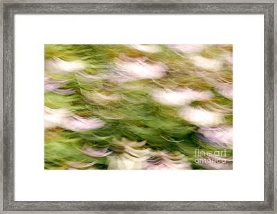 Coneflowers In The Breeze Framed Print