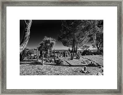 Framed Print featuring the photograph Conejo Cactus by Ross Henton