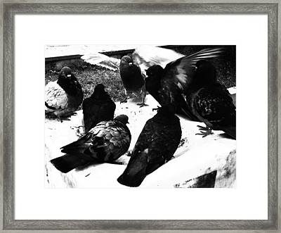 Conflict Framed Print by Lucy D