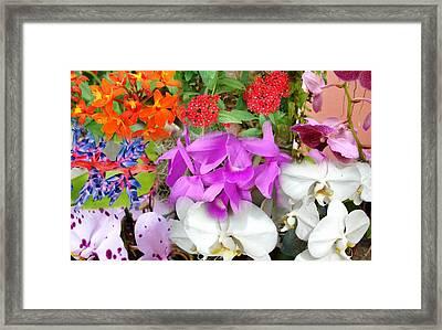 Confluent Flowers 10 Framed Print