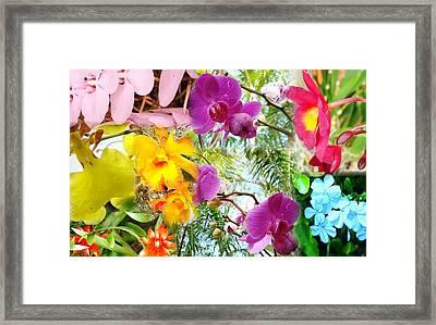 Confluent Flowers 11 Framed Print