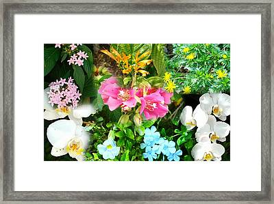 Confluent Flowers 12 Framed Print