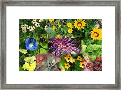 Confluent Flowers 3 Framed Print