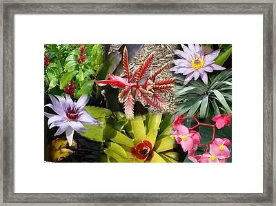 Confluent Flowers 4 Framed Print