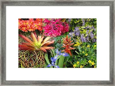 Confluent Flowers 6 Framed Print