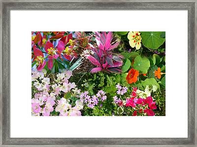 Confluent Flowers 7 Framed Print