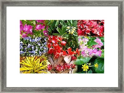 Confluent Flowers 8 Framed Print