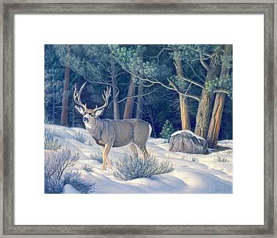 Confrontation - Mule Deer Buck Framed Print