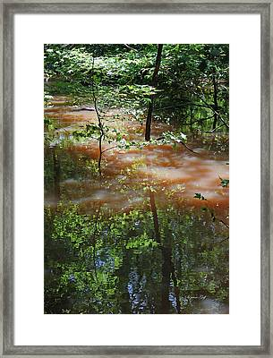 Congaree Swamp In Flood Conditions Framed Print by Suzanne Gaff
