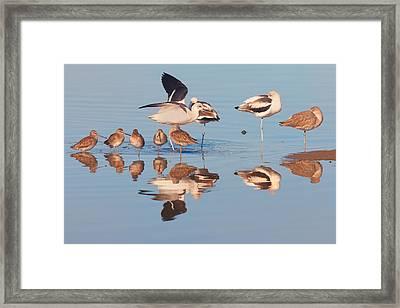 Congregation Framed Print