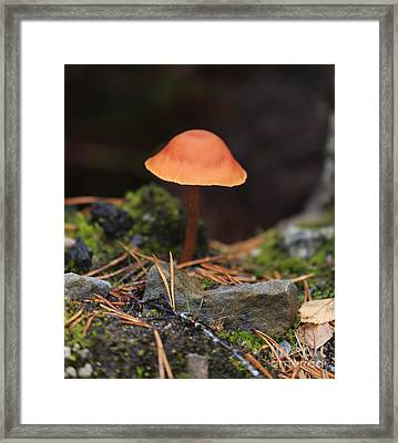 Conical Wax Cap Mushroom Framed Print by Louise Heusinkveld