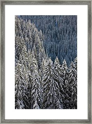 Conifer Forest In Fresh Snow In Kiental Framed Print