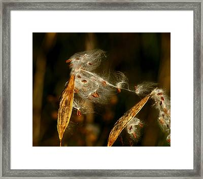 Connected Framed Print by Thomas Young