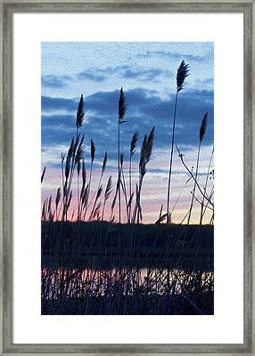Connecticut Sunset With Reeds And Swirls Framed Print by Marianne Campolongo