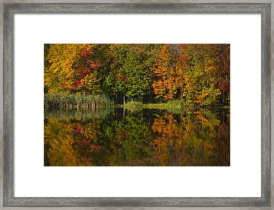 Connecticuts Colors Framed Print by Karol Livote