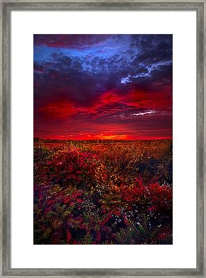 Connecting Framed Print by Phil Koch