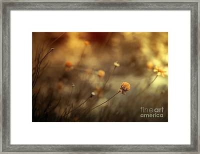 Connections Framed Print by Trish Mistric