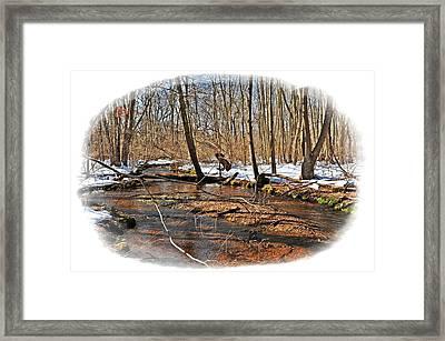 Connetquot Park Long Island Framed Print