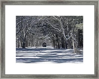 Connetquot State Park Framed Print