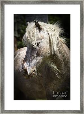 Consideration Framed Print by Carrie Cranwill