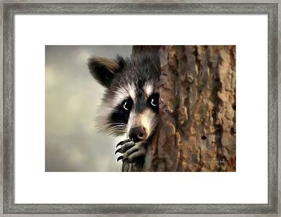 Conspicuous Bandit Framed Print by Christina Rollo