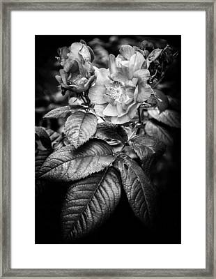 Consumed Framed Print by Matti Ollikainen