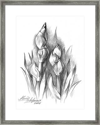 Conte Pencil Sketch Of Two Irises Framed Print