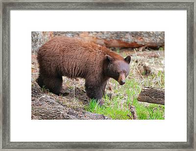 Contemplating Framed Print by David  Treick