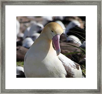 Contemplating Framed Print by F Hughes