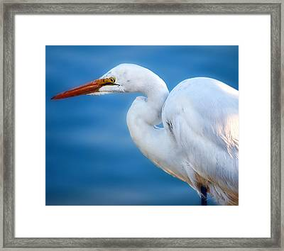 Contemplating Flight Framed Print by Camille Lopez