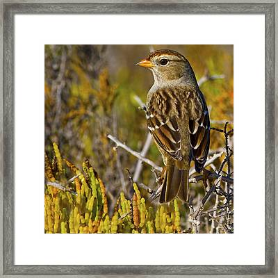 Framed Print featuring the photograph Contemplating The Day by Gary Holmes