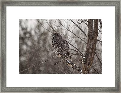 Contemplating Winter Framed Print