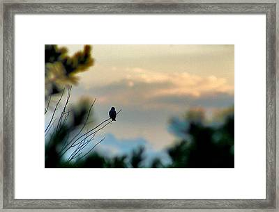 Framed Print featuring the photograph Contemplation by Bruce Patrick Smith