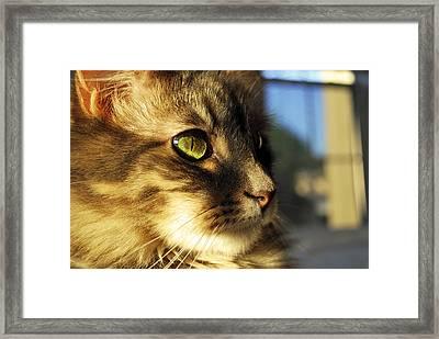 Golden Eye Framed Print by Gregory Ballos