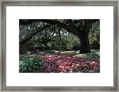 Contemplation Of A Magnificent Place Framed Print by Suzanne Gaff
