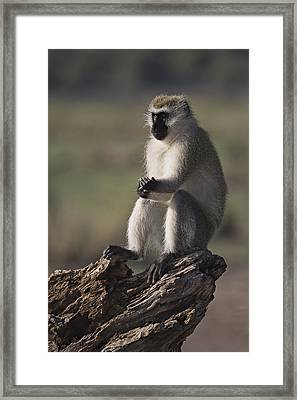 Framed Print featuring the photograph Contemplative by Antonio Jorge Nunes