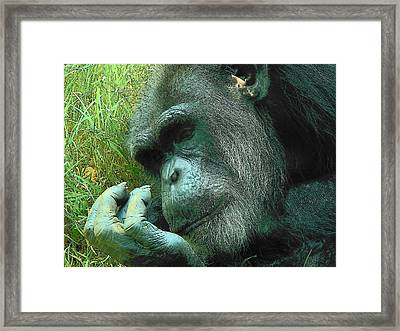 Framed Print featuring the photograph Contemplative Chimp by Rodney Lee Williams