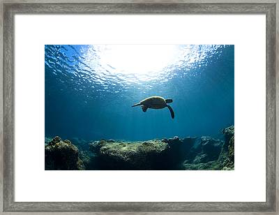 Contemplation Framed Print by Sean Davey
