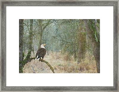 Content And Curious Framed Print