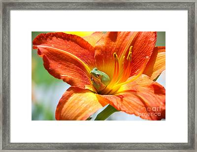 Content Framed Print by Kathy Gibbons