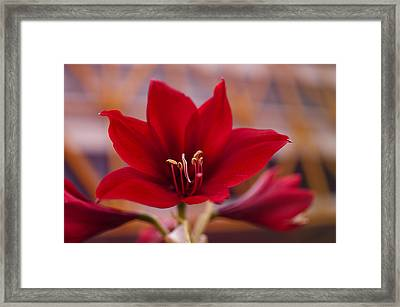 Framed Print featuring the photograph Content Tropics by Miguel Winterpacht