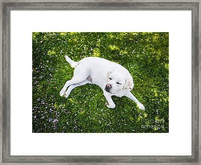 Contented Dog Framed Print