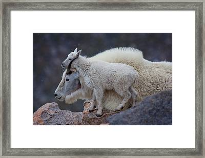 Contentment  Framed Print by Jim Garrison